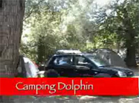 Movie Camping Dolphin